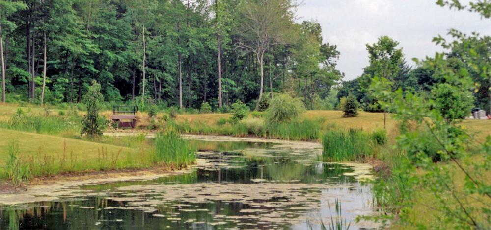 cedar-hill-wetland_16x10