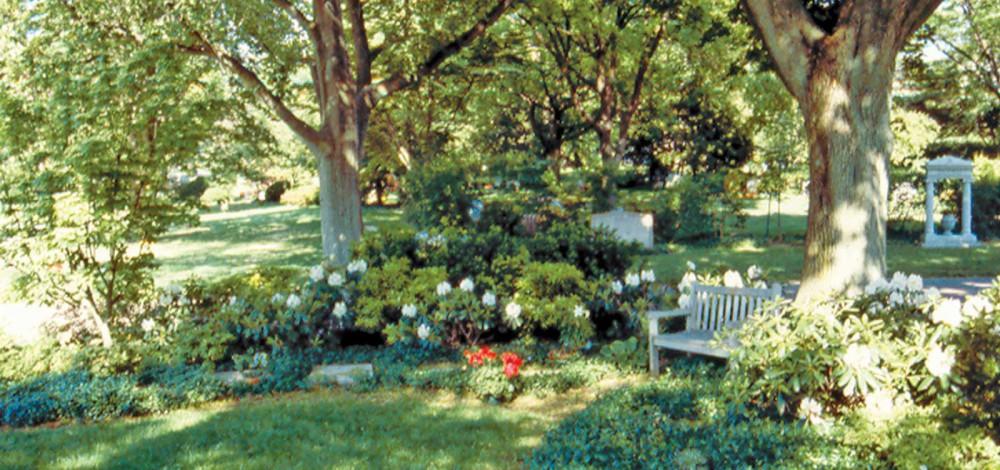 mt-auburn---moreshrubs-C